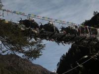 Yaky v údoli Solu Khumbu.